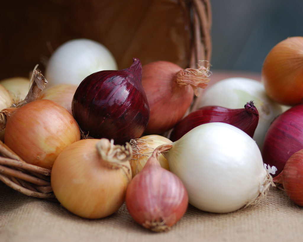 Onion and garlic: kitchen firebrands and healers